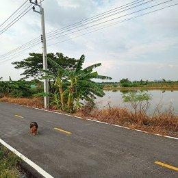 EHL - 213223 ขายที่ดิน เนื้อที่ 6ไร่ ต.บางแม่นาง อ บางใหญ่ จ.นนทบุรี ที่ติดถนน ติดคลอง