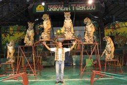 สวนเสือศรีราชา (Sriracha Tiger Zoo)