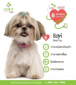 Be cautious! With the most infected diseases from 6 different dog breeds