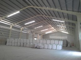CP Seed Chainat