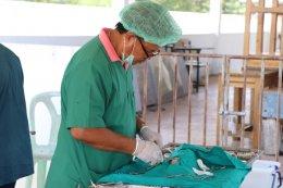 รณรงค์ฉีดวัคซีนป้องกันโรคพิษสุนัขบ้า 62