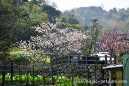 เที่ยวไต้หวันอิสระด้วยตัวเอง ไต้หวันออนทัวร์ ตอน 27 @ เที่ยวสวนหลังบ้านของไทเป อุทยานแห่งชาติหยางหมิงซาน