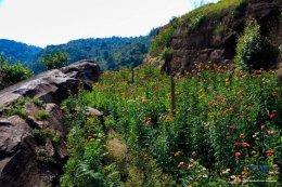อุทยานแห่งชาติภูหินร่องกล้า จังหวัดพิษณุโลก | เพชรบูรณ์  | เลย