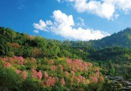 รวมสถานที่ชมดอกนางพญาเสือโคร่งเมืองไทย
