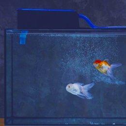 ระบบกรองเลี้ยงปลาสวยงามที่ดีเป็นอย่างไร
