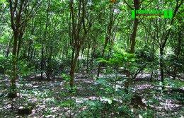 ชุมชนต้นน้ำน่าน อนุรักษ์ดิน น้ำ ป่า แก้ปัญหาภัยพิบัติอย่างยั่งยืน