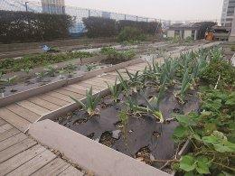อันซีนโตเกียว ตึกหุ่นยักษ์รักษ์โลก กับสวนผักลอยฟ้า