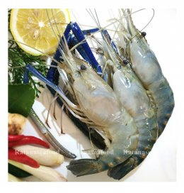 Fresh River Prawn