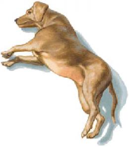 พิษสุนัขบ้า rabie