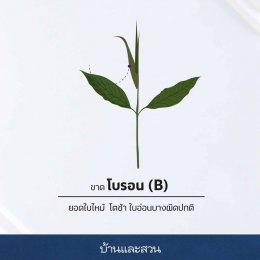 ลักษณะ 12 อาการต้นไม้ เจอแบบนี้ขาดธาตุอาหารชนิดใด