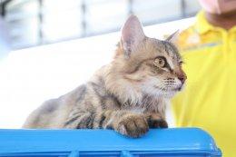 จัดโครงการสัตว์ปลอดโรค คนปลอดภัย จากโรคพิษสุนัขบ้า