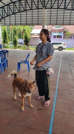 """โครงการ """"สัตว์ปลอดโรค คนปลอดภัย จากโรคพิษสุนัขบ้า"""""""