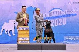 สุนัขพันธุ์เคนคอโซ่  Best OF Breed at Dog show