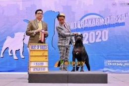 สุนัขพันธุ์เคนคอโซ่