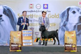 Cane Corso Best Of Breed at Dog show