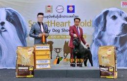 สุนัขพันธุ์เคนคอโซ่ Reserve Best of Breed at Dog show