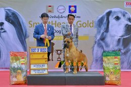 Presa Canario Best Of Breed at Dog show