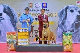 Presa Canario  Dog Breed At Dog Show