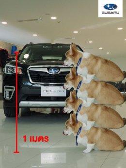 'น้องลูคัส' สุนัขพันธุ์คอร์กี้ ที่พกความน่ารักมาเต็ม 100