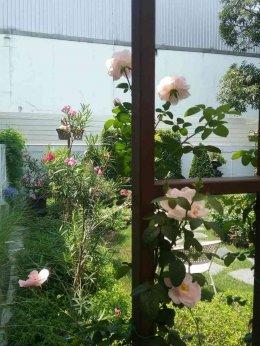 เคล็ดลับจัดสวนด้วยเทคนิคการเพิ่มมุมมองให้สวนสวยด้วยกระจก