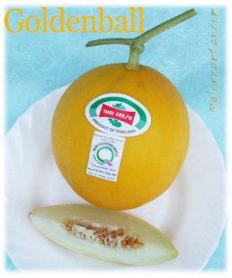 เมล็ด สีทองเนื้อขาว (Goldenball) เมล่อนผิวเรียบ (20s)