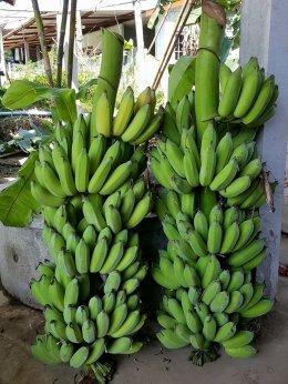 """เกษตรอินทรีย์ ออแกนิค พืชผัก สวนครัว ผลไม้ """"ระบบผู้จัดการมัน"""