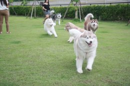 Dog Hotel & Park