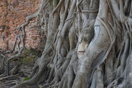 Ayutthaya Return by Cruise