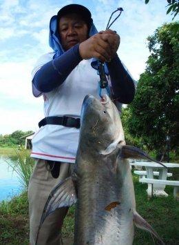 Jaopraya giant catfish