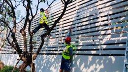 งานทาสีกำแพงใหม่ คอนโด บลากาเวีย