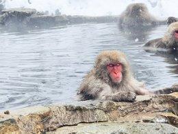ไปดูลิงหิมะที่ snow money park ในญี่ปุ่น
