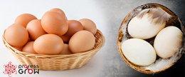 ไข่เป็ด – ไข่ไก่ ฟองไหนอร่อยกว่ากัน?