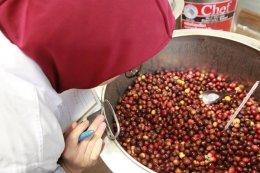Innovative Coffee Processing