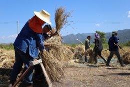 งานกรีนวิงรักเกษตรกร ปี 3