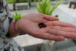 รีวิว Grape Seed Extract by คุณจอย