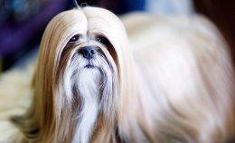 พาชมน้องหมาน่ารักสุดๆ งาน Dog Show 2019 ในอเมริกา
