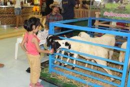 Amazing Animal Show2