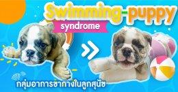 Swimming-puppy syndrome (กลุ่มอาการขากางในลูกสุนัข)