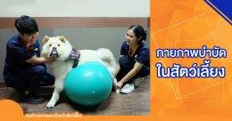 กายภาพบำบัดในสัตว์เลี้ยง สุนัขและแมว (Pet Rehabilitation)