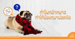 วิธีดูแลน้องหมาที่ปวดข้อ ในช่วงหน้าหนาว