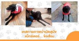 เรื่องเล่ากายภาพ... เคสน้องหมาโดนรถชนจนเชิงกรานหัก + เคสสุนัขบาดเจ็บไขสันหลังจนเป็นอัมพาต