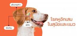 """""""เกาหู หูเหม็น ขี้หูดำ หูบวม"""" ปัญหาหูๆ ของสุนัขและแมว"""