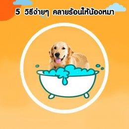 5 วิธีง่ายๆคลายร้อนให้น้องหมา