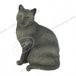 Korat (Siamese Cat)