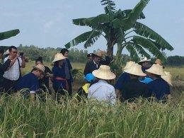 โครงการเกษตรปลอดภัยสูง