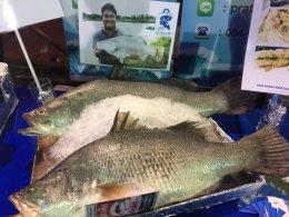 งานแถลงข่าวการจัดงานเทศกาลกินปลากะพงยักษ์ ของดีเมืองแปดริ้ว