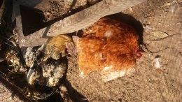 โครงการส่งเสริมและป้องกันโรคระบาดในสัตว์เลี้ยง ประจำปี ๒๕๖๓