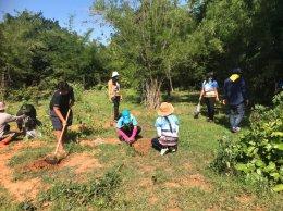 กิจกรรมปลูกต้นไม้โครงการตำบลสิงห์ร่วมใจรักษาสิ่งแวดล้อม