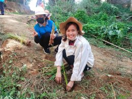 โครงการปลูกหญ้าแฝกตามพระราชดำริ ประจำปี 2563