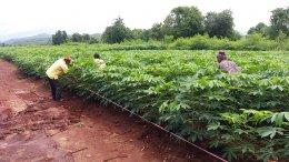 โครงการส่งเสริมงานวิชาการเกษตร